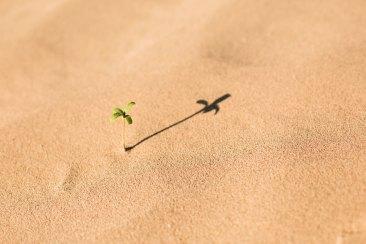 Hope by Evan Kirby