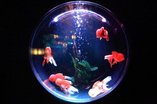 Aquarium fish by Kazuend-25768-unsplash