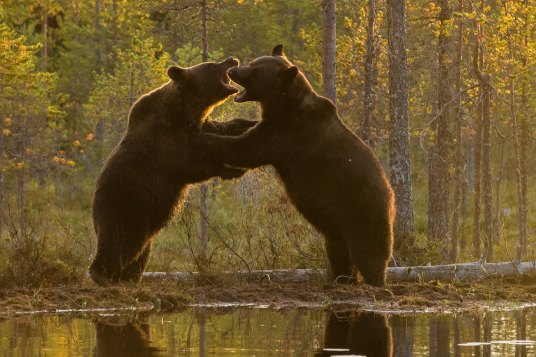 Two Bears by Roger Brendhagen-567544-unsplash