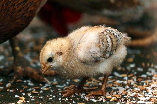 Chick by Prince Abid-630771-unsplash.jpg